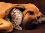 Dog and Cat Best Friends